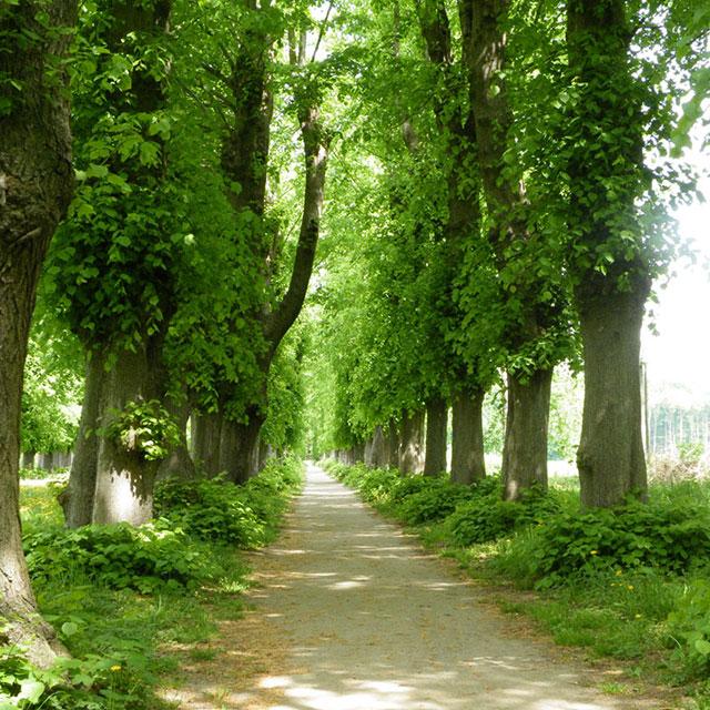 Park Jersbek